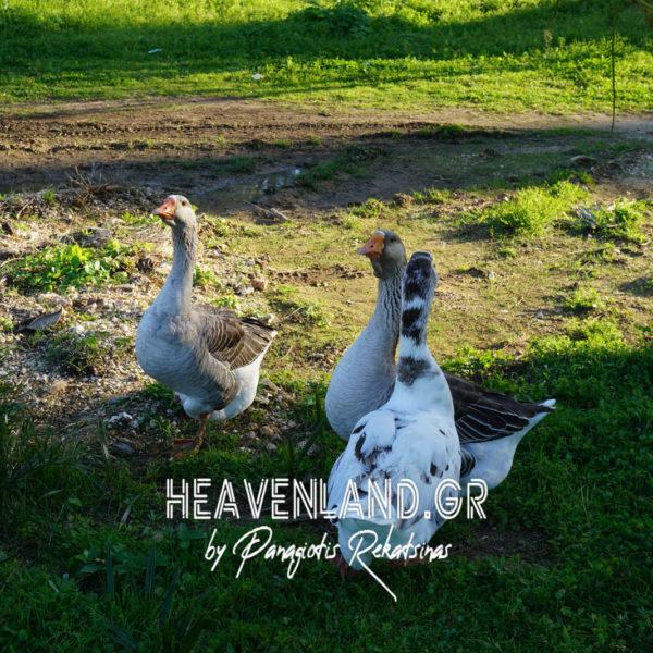 Υγροβιότοπος Κούταβου Πτηνά Λίμνη Αργοστολί Κεφαλονιάς