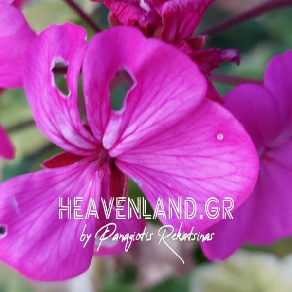 Τοπίο στα Λουλούδια.Φυσικά.Κ21